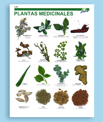 Plantas Medicinales Grupo Brio