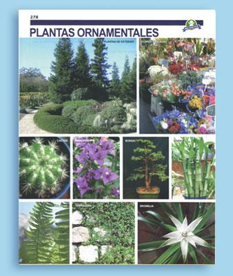 Plantas ornamentales grupo brio for Plantas ornamentales ejemplos y nombres